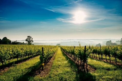 bergerac-vin-gastronomie.jpg